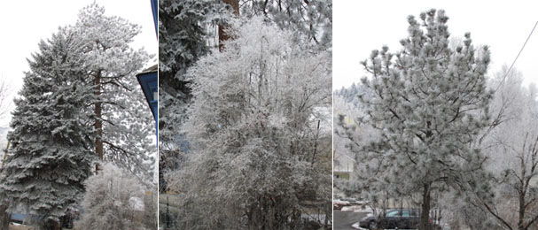Frosted Morning in Manitou Springs