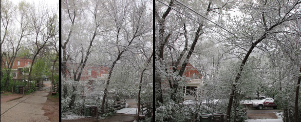 Mother's Day Snow in Manitou Springs