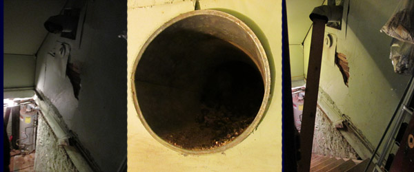 Raccoon in pipe in Chimney above basement  stairs