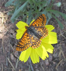 Butterfly on Intermann Trail