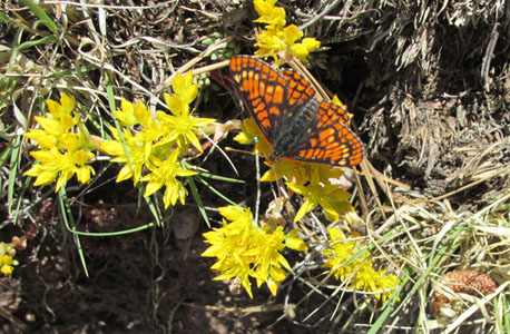 Butterfly on Intermann Trail in Manitou Springs
