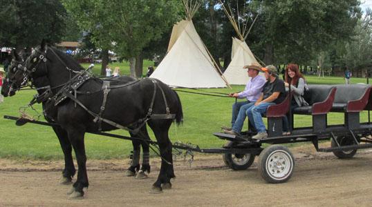Percheron Drawn Wagon