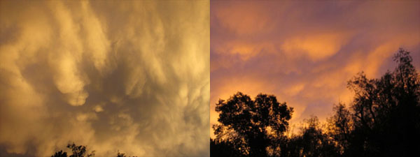 Golden Angels & Orage Tree Sunset in Manitou Springs
