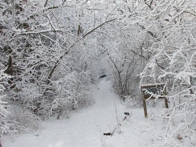 FB4_Snowy Trail_0688