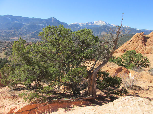 FB_PikesPeak GofG Cedar_1372