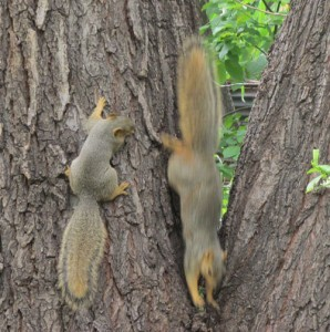 Mama & Baby Squirrel at Play